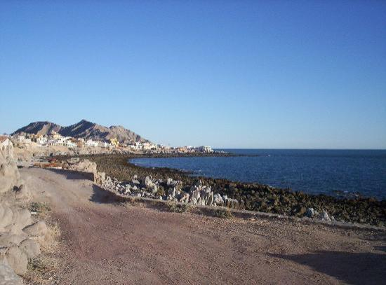 Puerto Penasco, Mexique : la cholla reef