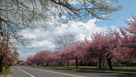 , : Chapel Avenue - Cherry Hill, NJ