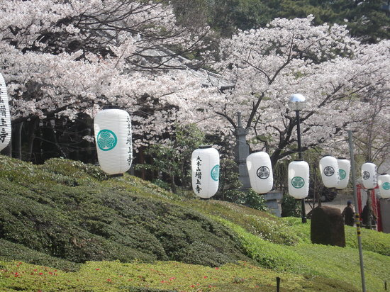 Cherry Blossoms in Tokyo Spring 2007