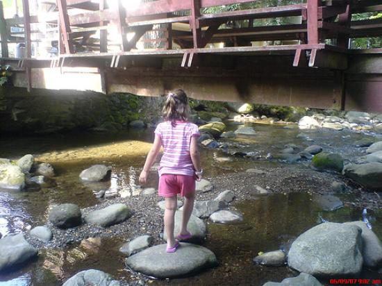 Carr's Northside Cottages & Motel: Playing in the creek