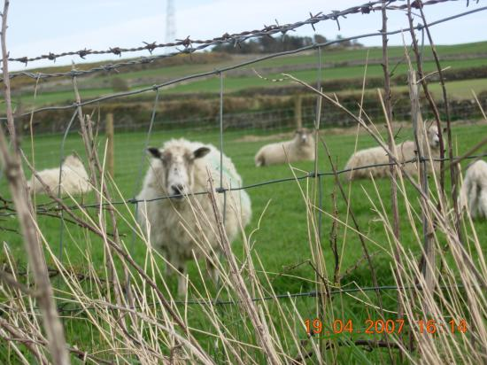 Port St. Mary, UK: Even The  Locals Are Friendly!!!!!!