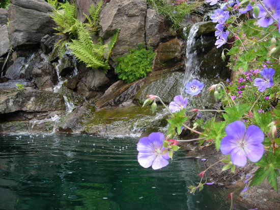 Wenatchee, WA: Flowers and Ponds