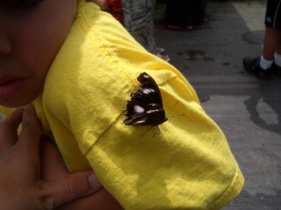 Tiverton, RI: Butterfly on my son's shoulder