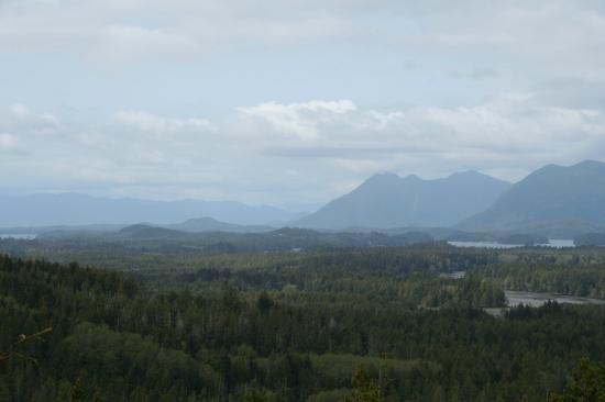 Evergreen Forest Cabins: view from radar hill