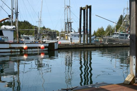 Evergreen Forest Cabins: ucluelet harbour