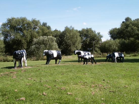 concrete-cows-do-exist.jpg