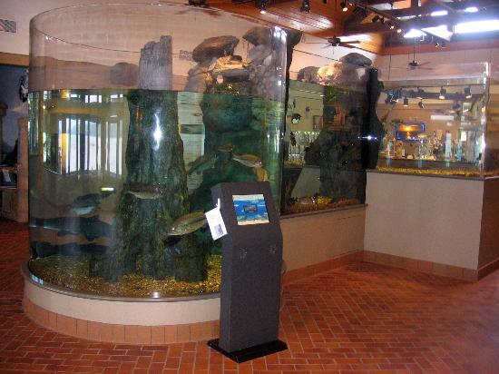 Aquarium picture of lake dardanelle state park for Lake dardanelle fishing report
