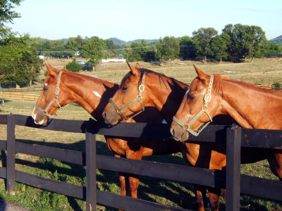Inn at Walking Horse Farm: The Horses
