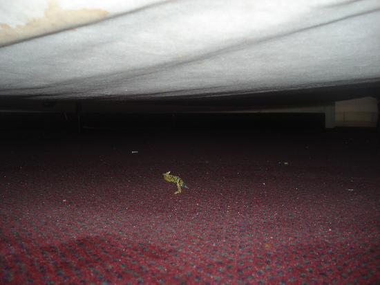 Americas Best Value Inn Myrtle Beach: underneath the bed... what is that thing?