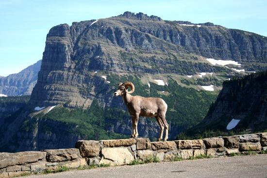 Garden Wall Inn: Logan Pass Local