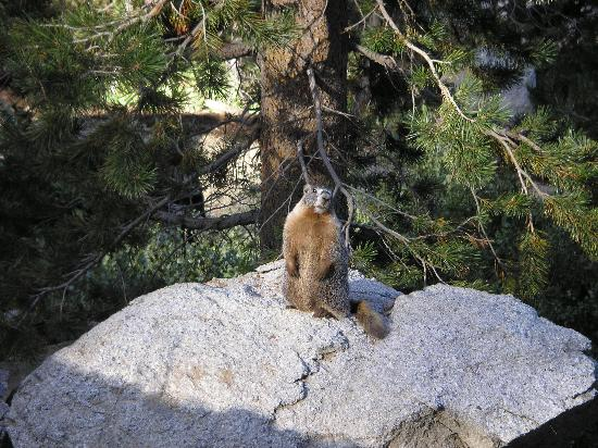 Sequoia High Sierra Camp: A furry friend
