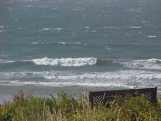 Ocean View From Waldport