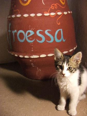 Afroessa Hotel: this cat slept with us