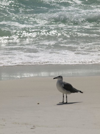 Destin, Floride : looking for food 