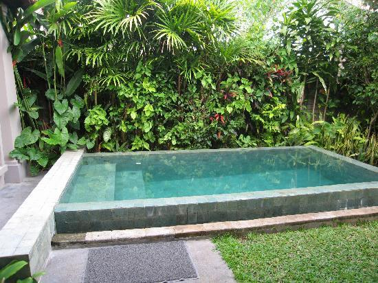 Pools for small yards on pinterest small pools small for Plunge pool design uk