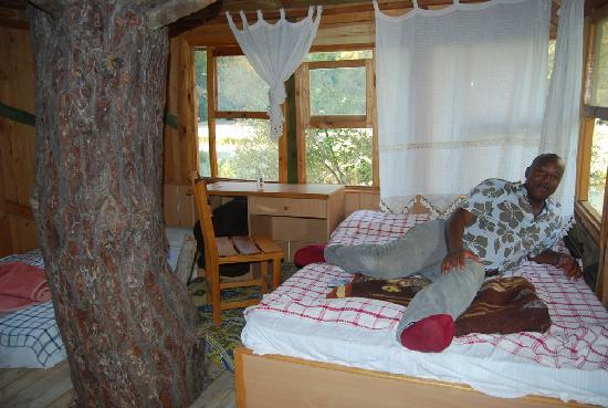 The Tree House Hotel. inside tree house hotel room