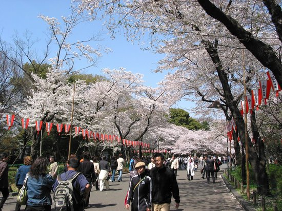 Ueno Park - Taito - Reviews of Ueno Park - TripAdvisor