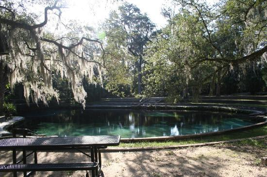 Juniper Springs Recreation Area: uniper Springs RA- blue hole / swimming area
