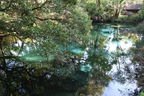 Juniper Springs Recreation Area: Juniper Springs RA - blue hole