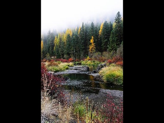 Baker City, Oregón: Fall foliage