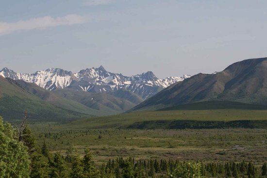 Denali National Park and Preserve, อลาสกา: The changing from trees to tundra in Denali