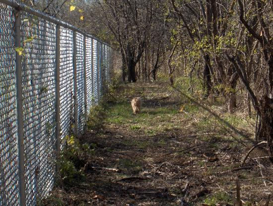 Fenced dog parks? | Seattle | Yelp