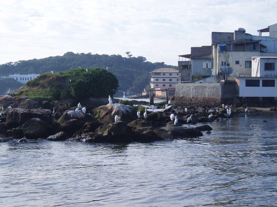 Macae, RJ: Birds in Maca Fishing Docks