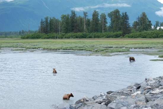 Valdez, AK: Three bears fishing along the road