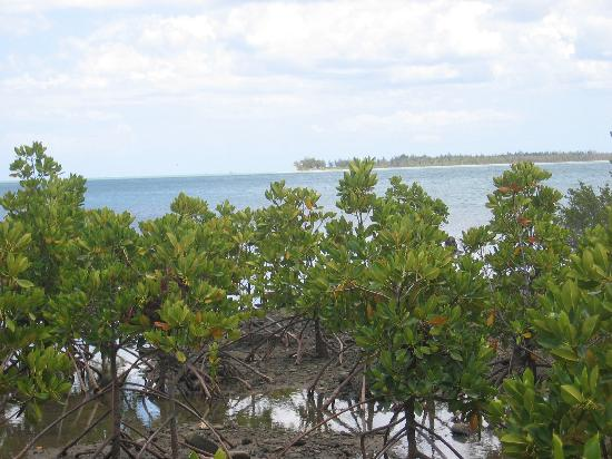 LUX Le Morne: Mangroves and Islands