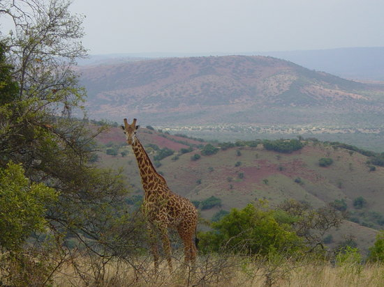Akagera National Park