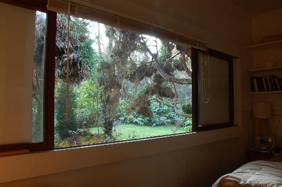 Hale Ohia Cottages: The view from our window
