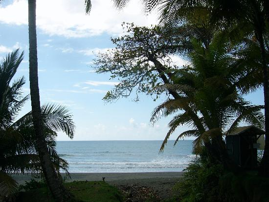 Corcovado Lodge Tent Camp: The view from our tent
