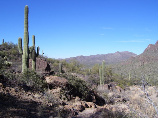 , : Tucson Mountain Park