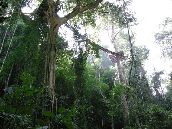 Chiang Mai, Thaïlande : Flight of the Gibbon - Skybridge