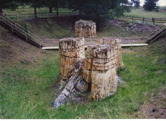 Florissant Fossil Beds National Monument Reviews - Florissant, CO Attractions - TripAdvisor
