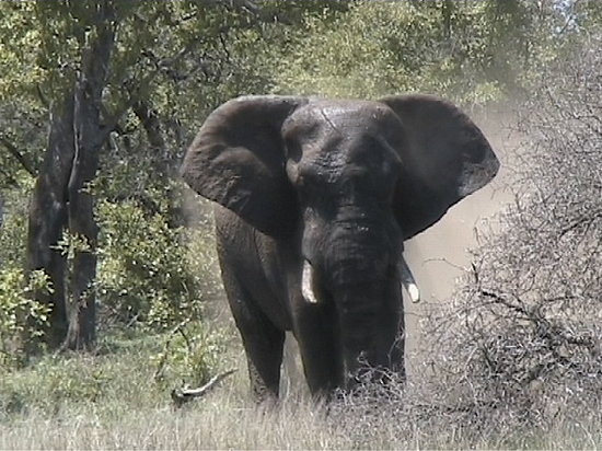 Krüger-Nationalpark, Südafrika: No this is Nosey