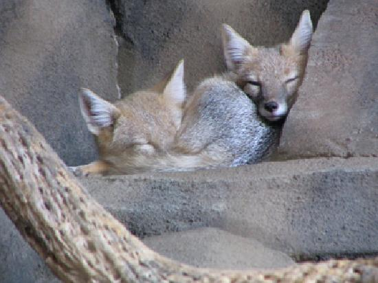 Sleeping Foxes In The Desert Dome Picture Of Henry