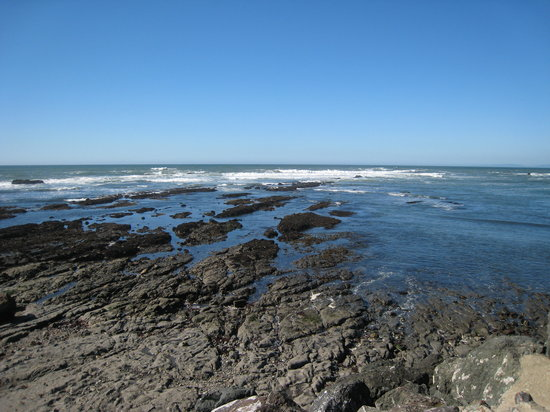 a description of tide pools in surrounding beach areas Check out our list of the best tide pools in the los angeles area  more tide  pools can be found at honeymoon cove and christmas tree cove nearby.