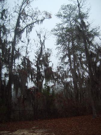 A Picture From Out Porch Uchee Creek Army Campground