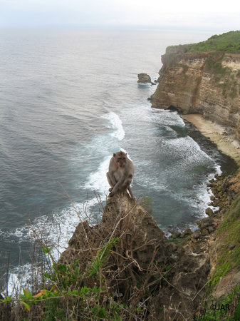 Bali: Monkey enjoying the view in Uluwatu