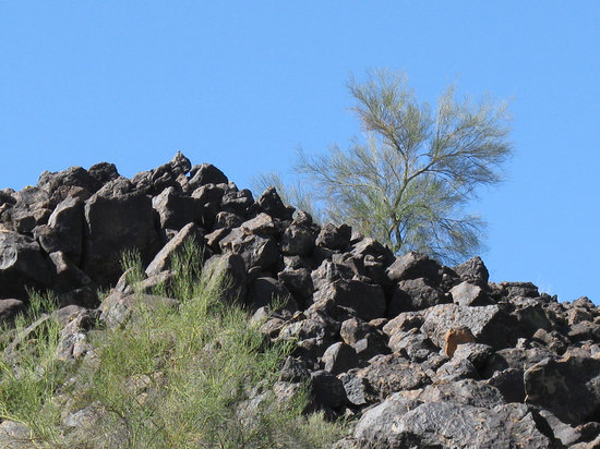 Glendale, AZ: Rocks