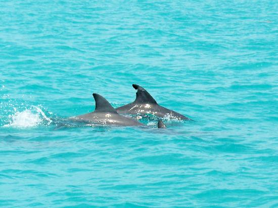 Florida Keys, FL: dolphins