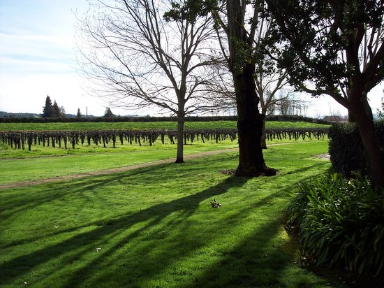 Santa Rosa, CA: Vintner's Inn: The Vineyards