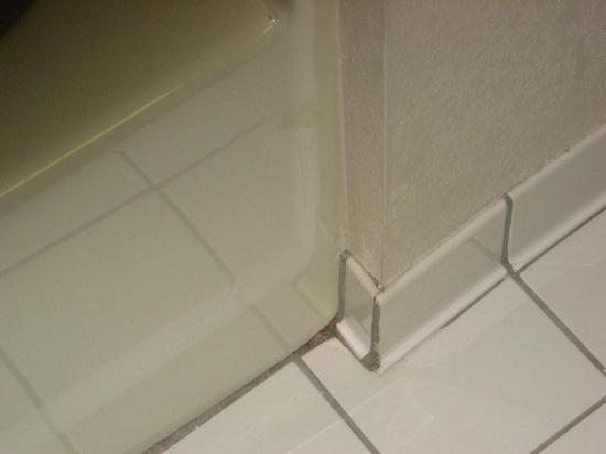Comfort Inn Asheville Airport: Mold around shower