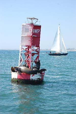 Bay Shores Peninsula Hotel: Sea lions seen on whale watching trip