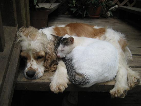 The Lily Pond House Hotel: Lola and her buddy