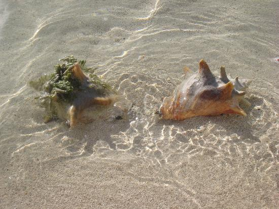 lord of the flies conch shell essay