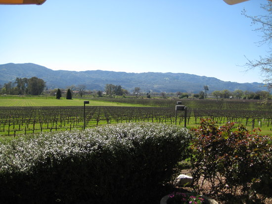 Rutherford, Californie : View of the vineyards from the patio
