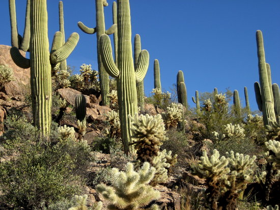 http://media-cdn.tripadvisor.com/media/photo-s/01/0e/24/2e/cactus.jpg
