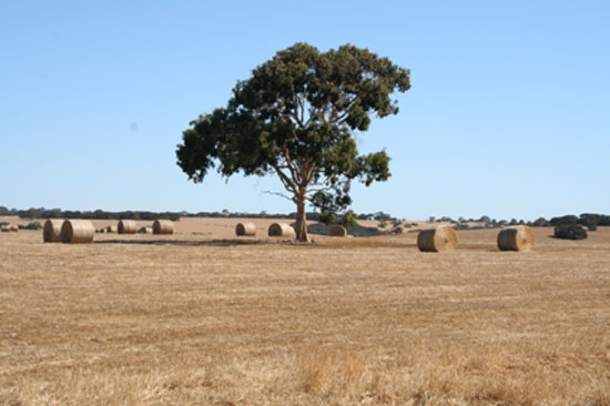 Kenguruya, Australia: Farming country, central KI